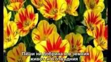 Дуи от КОРАНА