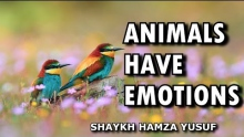 Animals Have Emotions - Shaykh Hamza Yusuf