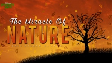 The Miracle Of Nature - Facts From The Quran
