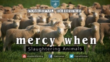 MERCY When Slaughtering Animals - Powerful Reminder