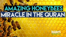 Honeybees - Amazing Architectures (Miracle of Quran)