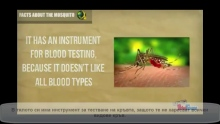 Аллах не се срамува да даде пример колкото комара