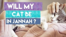 Will my cat be in Jannah? What Mufti Menk wants in Jannah ? Mufti Menk