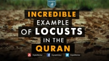 INCREDIBLE Example of Locusts in the Quran